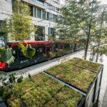 Grünbedachung auf Fahrgastunterstand Metropole in Amsterdam